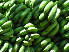 02 Bananas in Mollenda