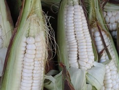 05 Large kernel corn