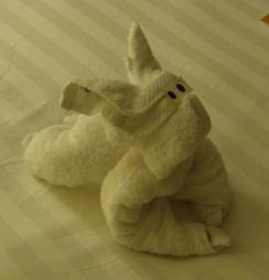05 towel bunny
