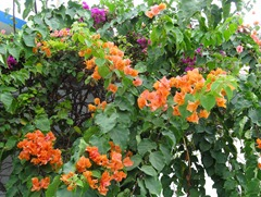 06 Tree with orange & purple flowers