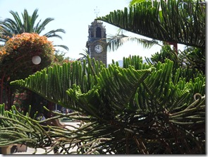07 Clocktower with strange evergreen