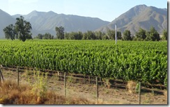 10 Vineyard in valley near Santiago