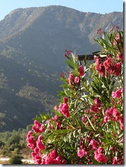 11 Mountain & red flower bush near Santiago