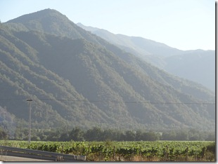 12 Vineyard in mountain valley near Santiago