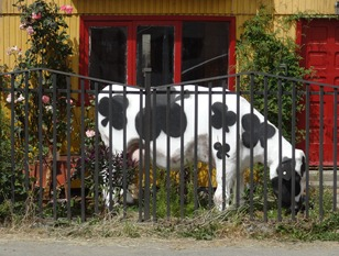 15 Cow sculpture