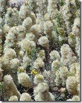 18 white flowers at drake castle