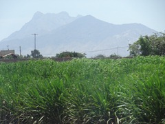 23 Sugar cane & mtn outside Trujillo