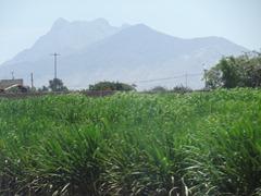23 Sugar cane & mtn outside Trujillo