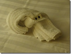 25 towel squid