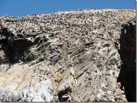 29 Cliff full of birds