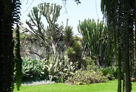 36 Cactus at Lorco  museum