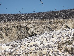 54 Hillside of birds