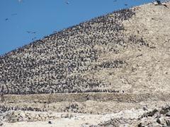 55 Hill of birds