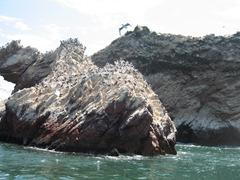 89 Birds on rock at Ballestas