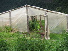 93 Greenhouse at campo in Pangal