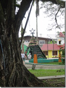 Christmas Tree in park, Bocas Del Toro