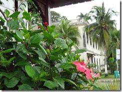 Town Hall, Bocas Del Toro
