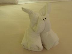 01 towel bunny