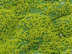 08 wildflowers at Otway Sound