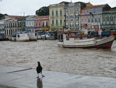 11 Vulture & boats at old port