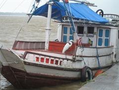 12 Egret on river boat