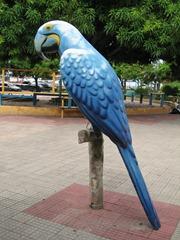 16 Parrot statue