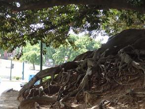 19 wide bottom tree in park