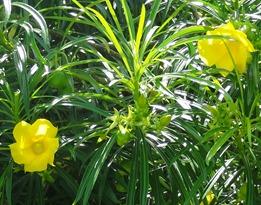 22 Yellow flowers