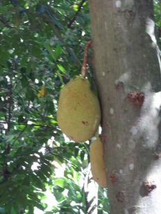 30 Jackfruit