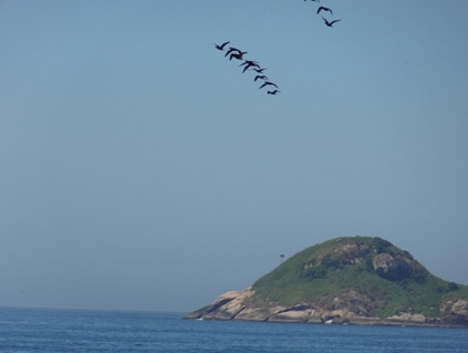 35 Birds over island