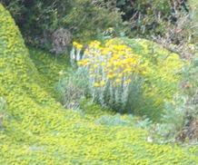 37 wildflowers at Otway
