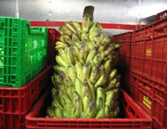 07 Banannas in vegetable storage room
