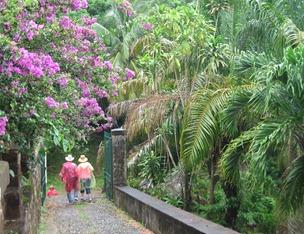 09 Purple azaleas near Commandant's house