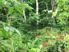 15 Rainforest with red flowers