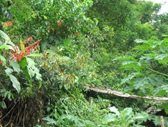 16 Rainforest