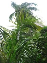 20 Palms