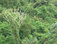 31 rain forest