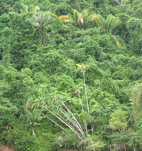 32 Rain forest