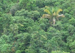 33 rain forest