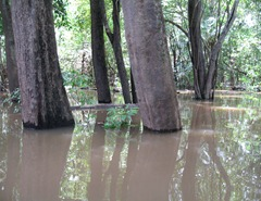 40 Swamp