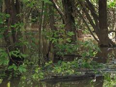 41 Swamp