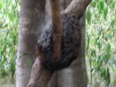 43 Termite nest