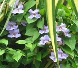 47 Flowers near hotel