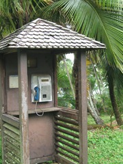 52 Telephone booth in rainforest
