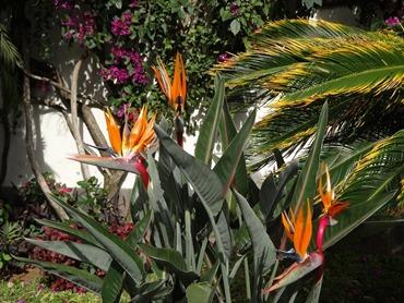 11. Funchal, Madeira 03-24-13