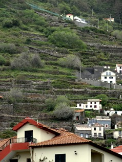 156a. Funchal, Madeira Porto Moniz (terraced hill)