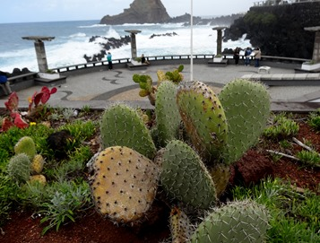 159a. Funchal, Madeira Porto Moniz (cactus & rocks)_ShiftN