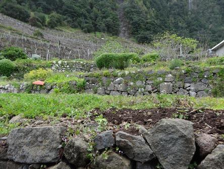 174. Funchal, Madeira Sexial
