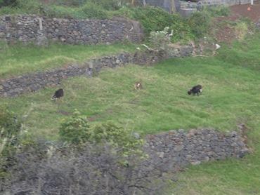 24. Funchal, Madeira 03-24-13