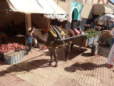 44.  Taroudant, Morocco